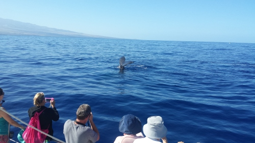 A whale checking out our boat